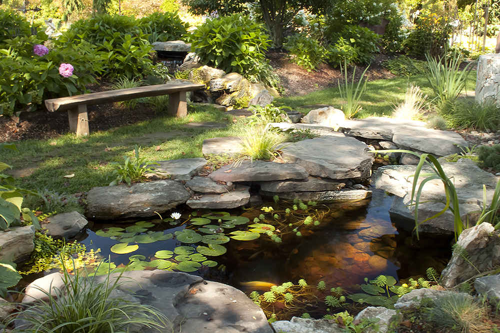 Pond types for Garden pond design books